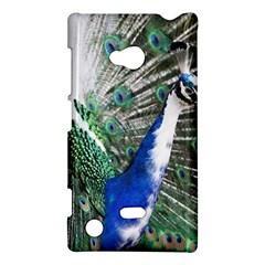 Animal Photography Peacock Bird Nokia Lumia 720