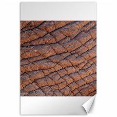 Elephant Skin Canvas 20  X 30