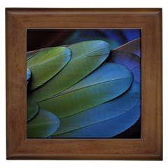 Feather Parrot Colorful Metalic Framed Tiles