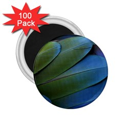 Feather Parrot Colorful Metalic 2 25  Magnets (100 Pack)