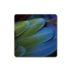 Feather Parrot Colorful Metalic Square Magnet