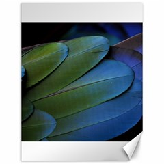 Feather Parrot Colorful Metalic Canvas 12  X 16