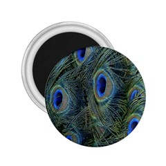 Peacock Feathers Blue Bird Nature 2 25  Magnets
