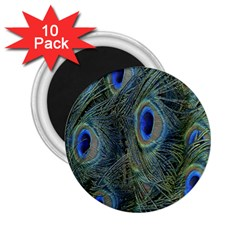 Peacock Feathers Blue Bird Nature 2 25  Magnets (10 Pack)