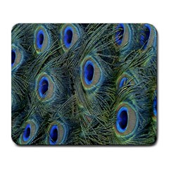 Peacock Feathers Blue Bird Nature Large Mousepads