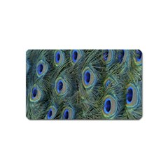 Peacock Feathers Blue Bird Nature Magnet (Name Card)
