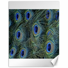 Peacock Feathers Blue Bird Nature Canvas 12  X 16
