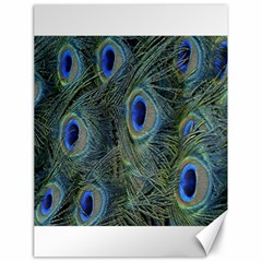 Peacock Feathers Blue Bird Nature Canvas 18  X 24