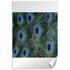 Peacock Feathers Blue Bird Nature Canvas 24  X 36