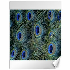 Peacock Feathers Blue Bird Nature Canvas 36  X 48