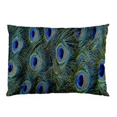 Peacock Feathers Blue Bird Nature Pillow Case (two Sides)