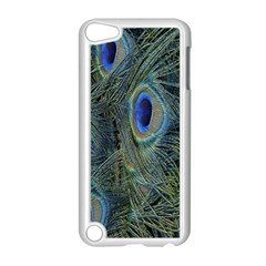 Peacock Feathers Blue Bird Nature Apple Ipod Touch 5 Case (white)