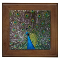 Peacock Feather Beat Rad Blue Framed Tiles