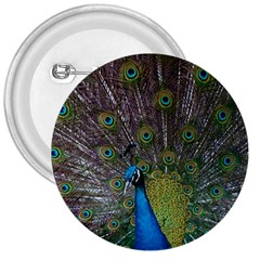 Peacock Feather Beat Rad Blue 3  Buttons