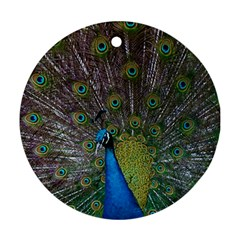 Peacock Feather Beat Rad Blue Ornament (Round)
