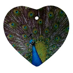 Peacock Feather Beat Rad Blue Ornament (heart)