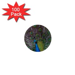 Peacock Feather Beat Rad Blue 1  Mini Magnets (100 Pack)