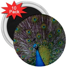 Peacock Feather Beat Rad Blue 3  Magnets (10 Pack)
