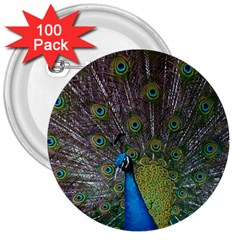 Peacock Feather Beat Rad Blue 3  Buttons (100 Pack)