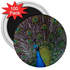 Peacock Feather Beat Rad Blue 3  Magnets (100 Pack)