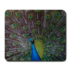 Peacock Feather Beat Rad Blue Large Mousepads