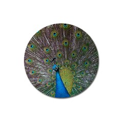 Peacock Feather Beat Rad Blue Magnet 3  (Round)