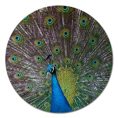Peacock Feather Beat Rad Blue Magnet 5  (round)