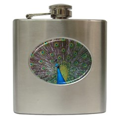 Peacock Feather Beat Rad Blue Hip Flask (6 Oz)