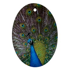 Peacock Feather Beat Rad Blue Oval Ornament (two Sides)