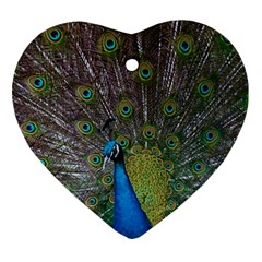 Peacock Feather Beat Rad Blue Heart Ornament (two Sides)