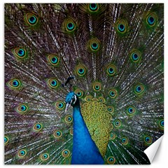 Peacock Feather Beat Rad Blue Canvas 12  X 12