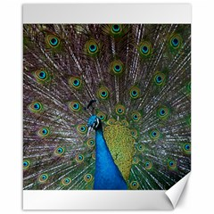 Peacock Feather Beat Rad Blue Canvas 16  x 20