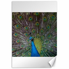 Peacock Feather Beat Rad Blue Canvas 20  X 30