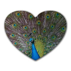 Peacock Feather Beat Rad Blue Heart Mousepads