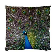 Peacock Feather Beat Rad Blue Standard Cushion Case (one Side)