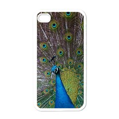 Peacock Feather Beat Rad Blue Apple Iphone 4 Case (white)