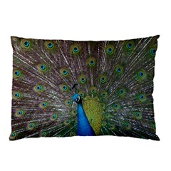 Peacock Feather Beat Rad Blue Pillow Case (two Sides)