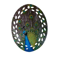 Peacock Feather Beat Rad Blue Ornament (oval Filigree)
