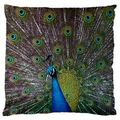 Peacock Feather Beat Rad Blue Large Cushion Case (one Side)