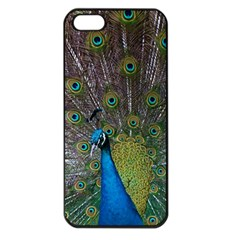 Peacock Feather Beat Rad Blue Apple Iphone 5 Seamless Case (black)