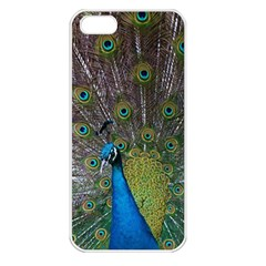 Peacock Feather Beat Rad Blue Apple Iphone 5 Seamless Case (white)