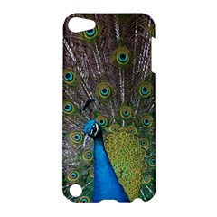 Peacock Feather Beat Rad Blue Apple Ipod Touch 5 Hardshell Case