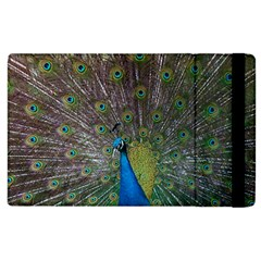 Peacock Feather Beat Rad Blue Apple Ipad 2 Flip Case