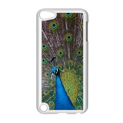 Peacock Feather Beat Rad Blue Apple Ipod Touch 5 Case (white)