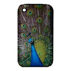 Peacock Feather Beat Rad Blue Iphone 3s/3gs