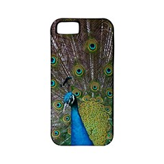 Peacock Feather Beat Rad Blue Apple Iphone 5 Classic Hardshell Case (pc+silicone)