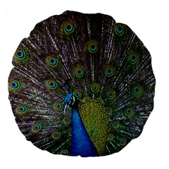 Peacock Feather Beat Rad Blue Large 18  Premium Round Cushions