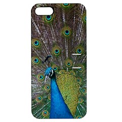 Peacock Feather Beat Rad Blue Apple Iphone 5 Hardshell Case With Stand