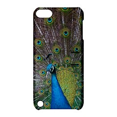 Peacock Feather Beat Rad Blue Apple Ipod Touch 5 Hardshell Case With Stand