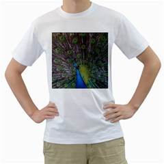 Peacock Feather Beat Rad Blue Men s T Shirt (white)